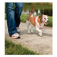 Easy Walk - Hunde Halfter, Hundehalfter, Headcollar - Small rot