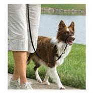 Easy Walk - Hunde Halfter, Hundehalfter, Headcollar - Medium schwarz