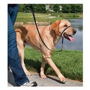 Easy Walk - Hunde Halfter, Hundehalfter, Headcollar - Large, schwarz