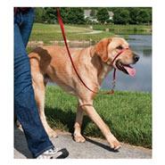 Easy Walk - Hunde Halfter, Hundehalfter, Headcollar - Large, rot