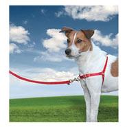 Easy Walk - Hunde Geschirr, Small, rot