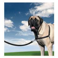 Easy Walk - Hunde Geschirr, X-Large, schwarz