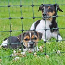 VOSS.miniPET schrikdraadnet 10 meter, groen 60cm hondennet, afrasteringsnet met groene opstelpalen met 1 metalenpunt