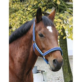 """Kerbl """"exclusive"""" halster voor paarden en ponys met versterkte banden"""