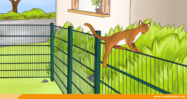 Katze klettert ueber gartenzaun - Gartenzaun fur hunde ...