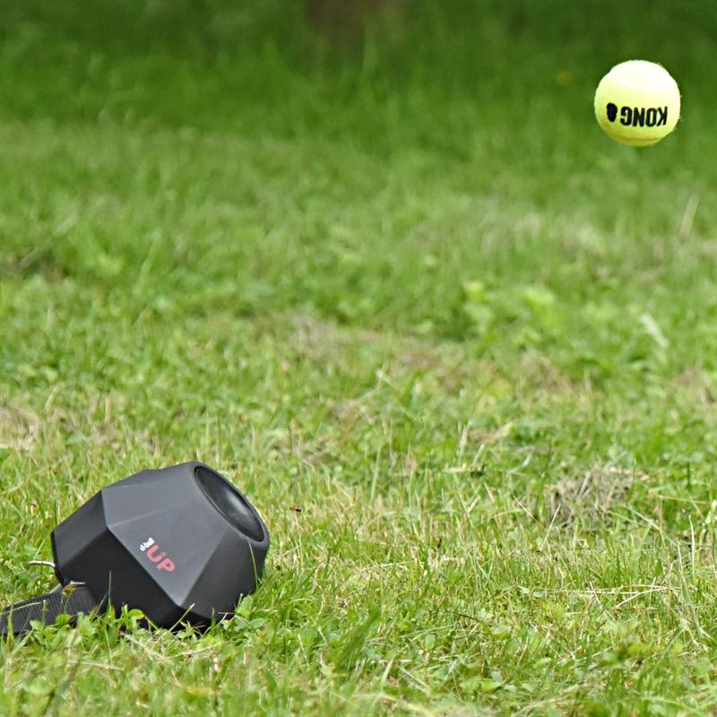 24412-DogTrace-D-ball-UP-Hundeausbildung-Hundeschule.jpg