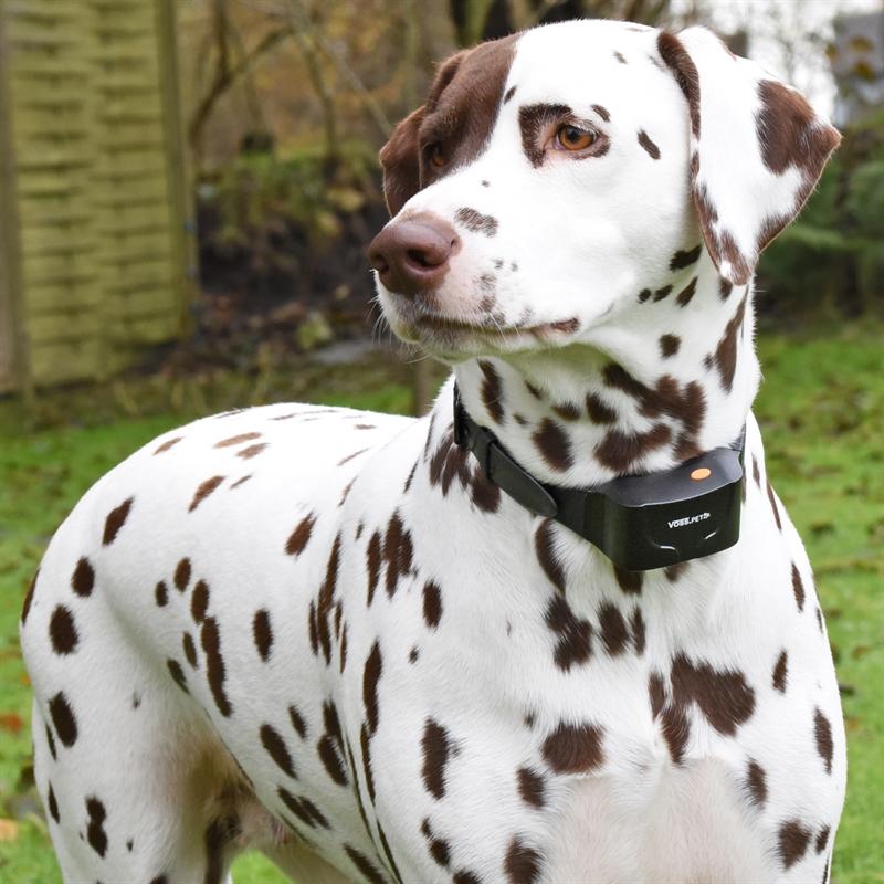 24540-24541-VOSS.PET-Sensi-Dog-600-Dalmatiner-Dode.jpg