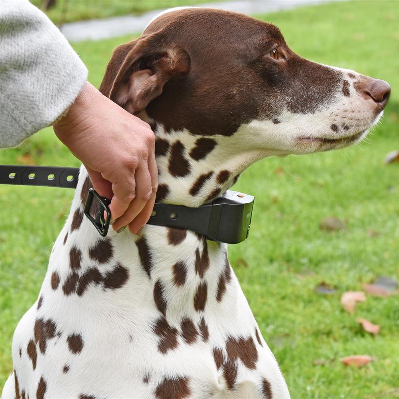 24540-24541-VOSS.PET-Sensi-Dog-600-Handsender-fuer-Hunde-10kg.jpg
