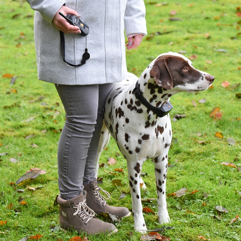 24540-24541-VOSS.PET-Sensi-Dog-600-fuer-sensible-Hunde.jpg