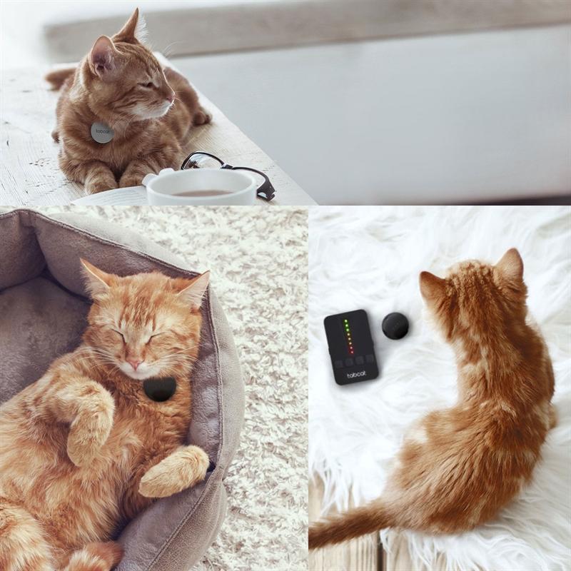 2515-Starter-Set-Locator-Hundeortung-Katzenortung-TabCat-schutz-Lifestyle.jpg