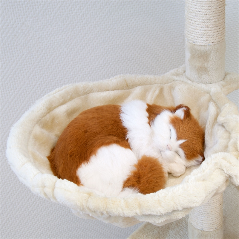 26620-Aspen-beige-Kratzen-spielen-Kratzbaum-cat-tower-toy.jpg