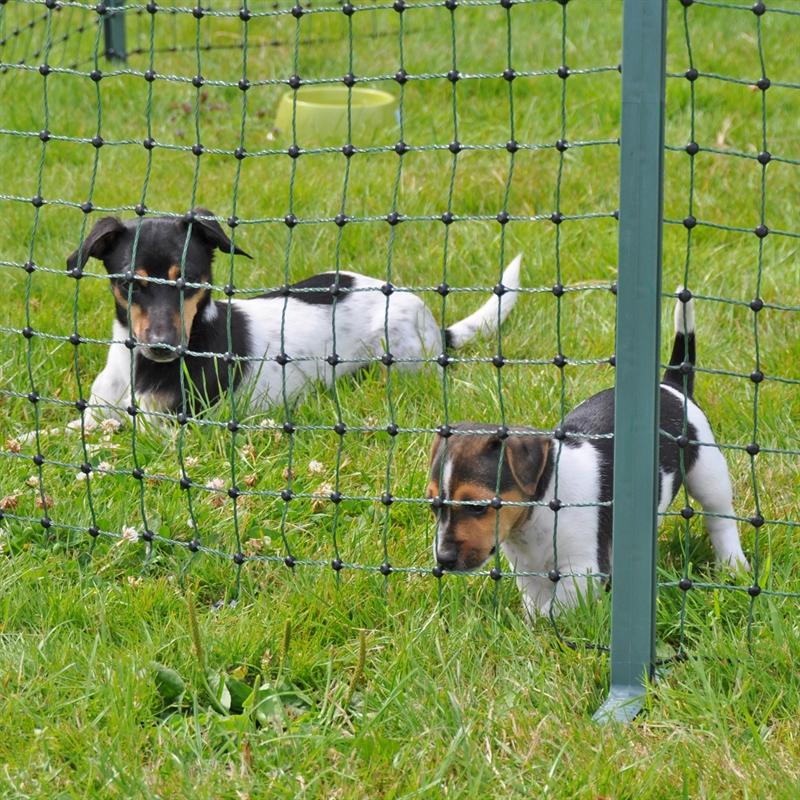 27701-Hundezaun-im-Garten-Hundezaun-Netz.jpg
