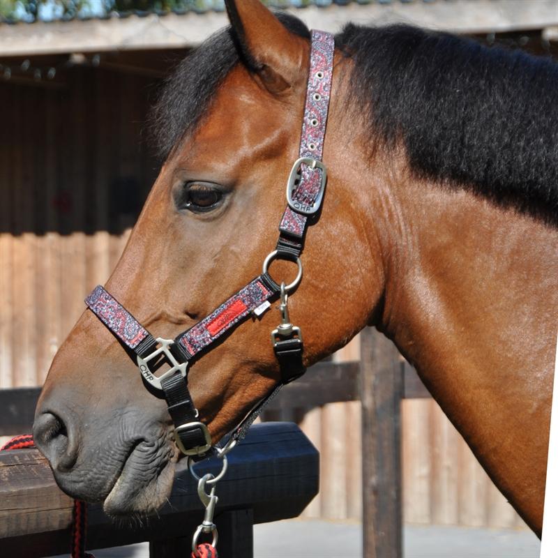 501032-halfterset-mit-tasche-qhp-pferde-ponys-paisly-7.jpg