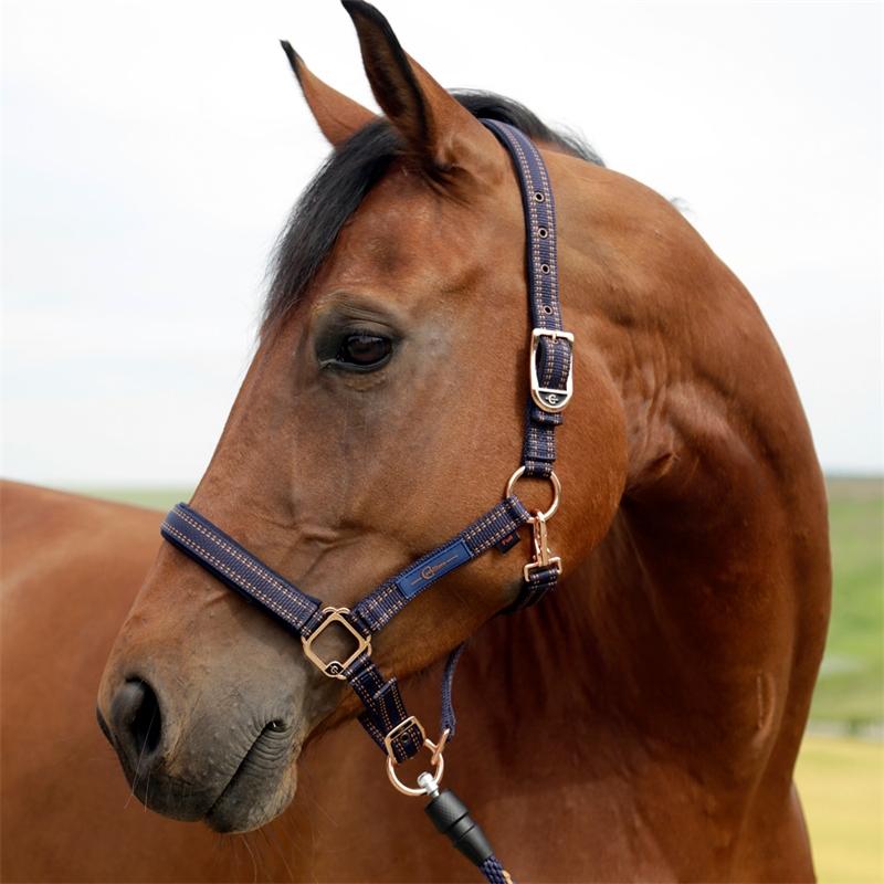 501310-goleygo-pferdehalfter-blau-caramel-unterlegt-mit-synthese-kautschuk.jpg