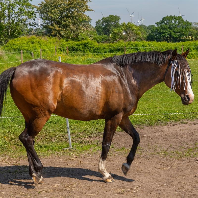 505460-qhp-pferde-und-pony-fliegen-stirnband-mit-kehlriemen-zebra-augenschutz.jpg