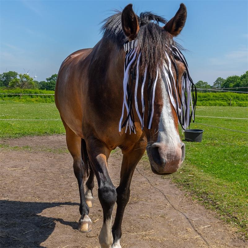 505460-qhp-pferde-und-pony-fliegen-stirnband-mit-kehlriemen-zebra-schuetzt-die-augen.jpg