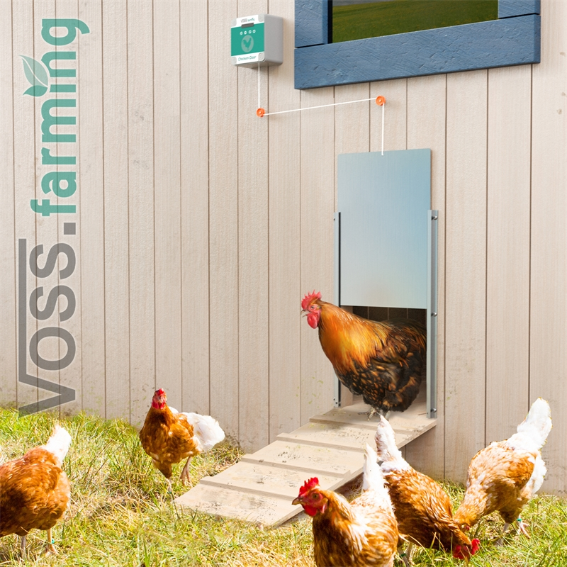 561852-voss-farming-automatische-huehnerklappe-praxisbild.jpg