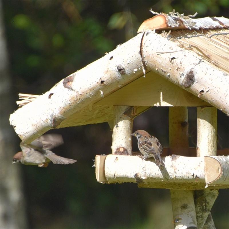 930430-voss-garden-garten-vogelhaus-holm-wildvoegel.jpg