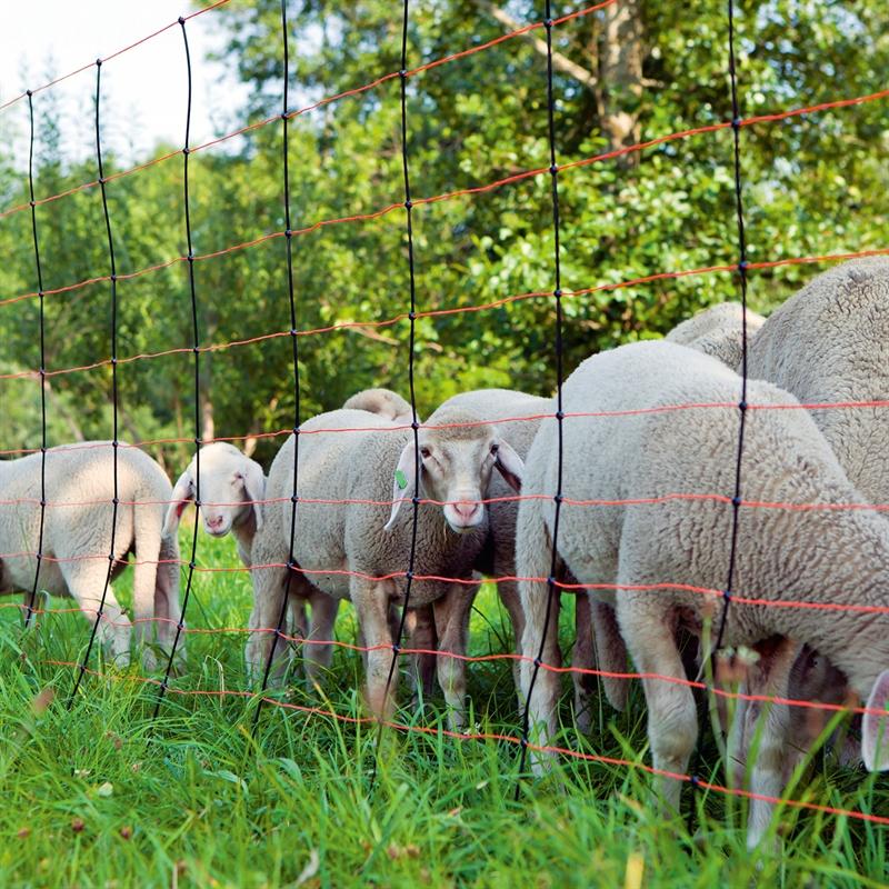 Schafnetz-Weidezaunnetz-Titannetz-mit-Vertikalstreben.jpg