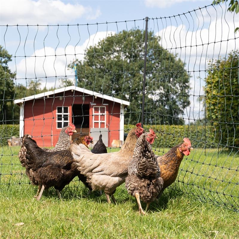 voss-farming-gefluegelnetz-gruen-praxisbil-5.jpg
