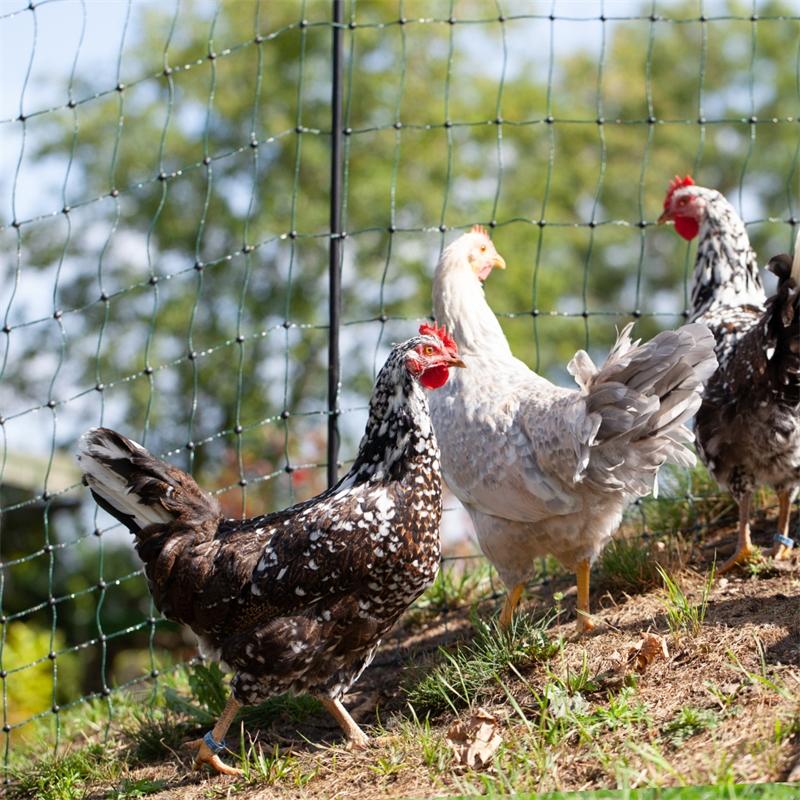 voss-farming-huetenetz-haustiernetz-gruen-praxisbild-14.jpg