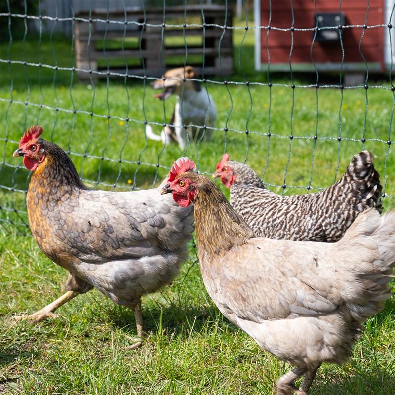 voss-farming-huetenetz-haustiernetz-gruen-praxisbild-7.jpg
