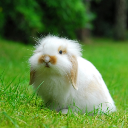 12m elektronetz netz zaun hund katze kaninchen hase marder waschb r fuchs ua ebay. Black Bedroom Furniture Sets. Home Design Ideas