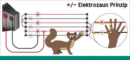 Plus-Minus Zaun, der ideale Zaun zur Kleintierabwehr z.B. Marder, Waschbären, Katzen usw.