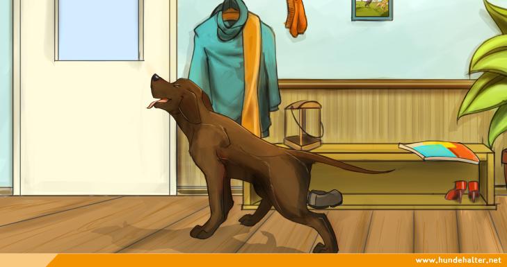 Hund bellt in Wohnung