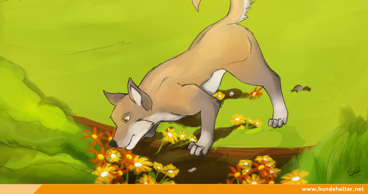 Hund graebt im Garten