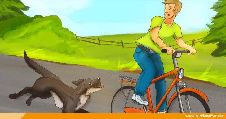 Hund jagt Fahrrad