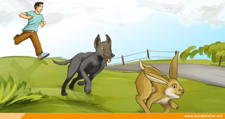 Hund jagt Hasen
