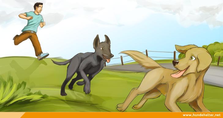 Hund jagt anderen Hund