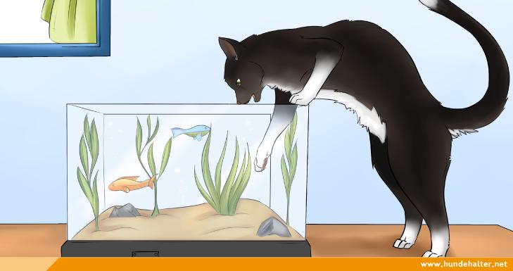 Katze fernhalten vom Aquarium