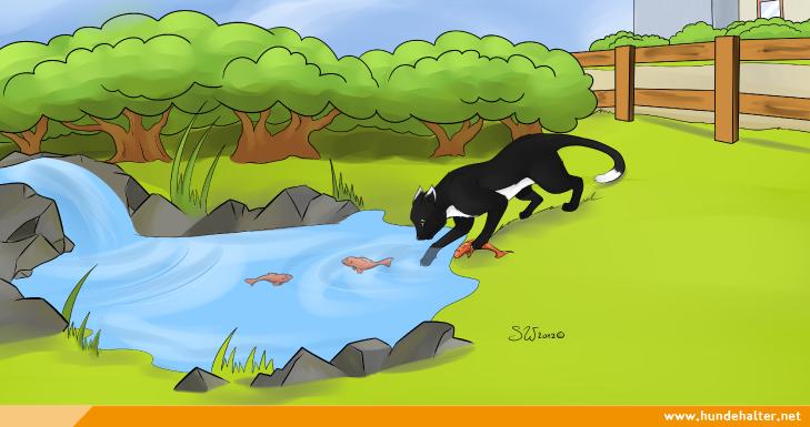 Katze fischt am Teich