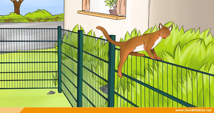 Katze klettert ueber Gartenzaun