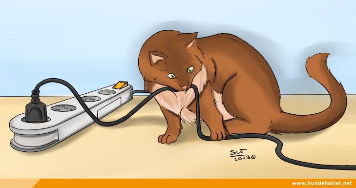 Katze knabbert an Kabel