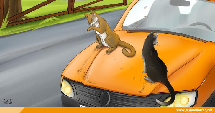 Katze laeuft ueber Auto
