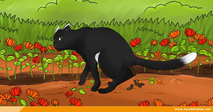 Katze macht ins Blumenbeet