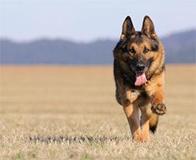 weidezaun.info informiert: Wolfsschutz