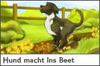 Hundehalter.net Ratgeber - Hund macht ins Beet
