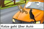 Hundehalter.net Ratgeber - Katze geht über Auto