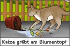 Hundehalter.net Ratgeber - Katze gr�bt im Blumentopf