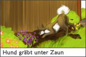 Hundehalter.net Ratgeber - Hund gräbt unter dem Zaun