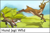 Hundehalter.net Ratgeber - Hund jagt Wild