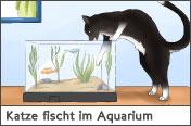 Hundehalter.net Ratgeber - Katze fischt im Aquarium