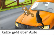Hundehalter.net Ratgeber - Katze geht �ber Auto