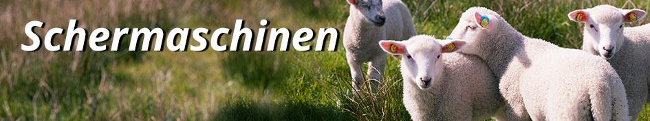 Schermaschinen für Schafe