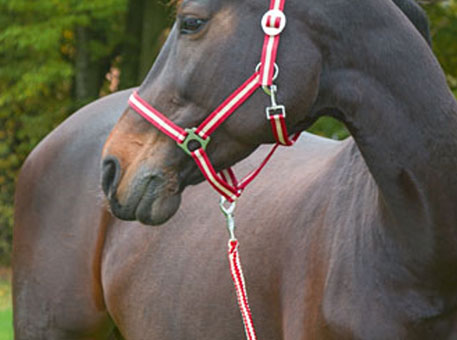 pony-halfter-stricke