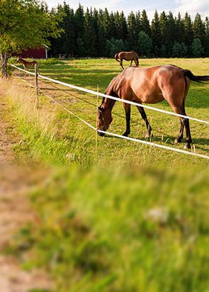 pferde-komplettsets